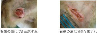 tokozure1
